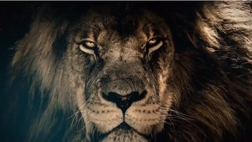 Lion Latest Whatsapp Status Video Download – Unique 2020